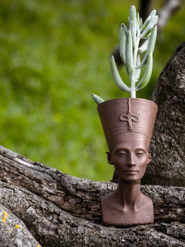 nefertiti succulent planter