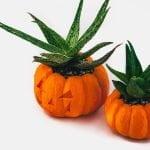 pumpkin_planter-01
