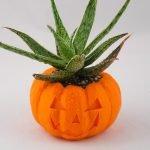 pumpkin_planter-02