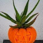 pumpkin_planter-05