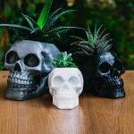 skull_planter_outside