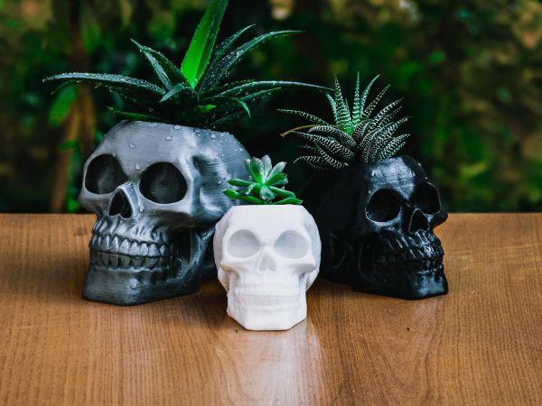 Skull Planter Outside
